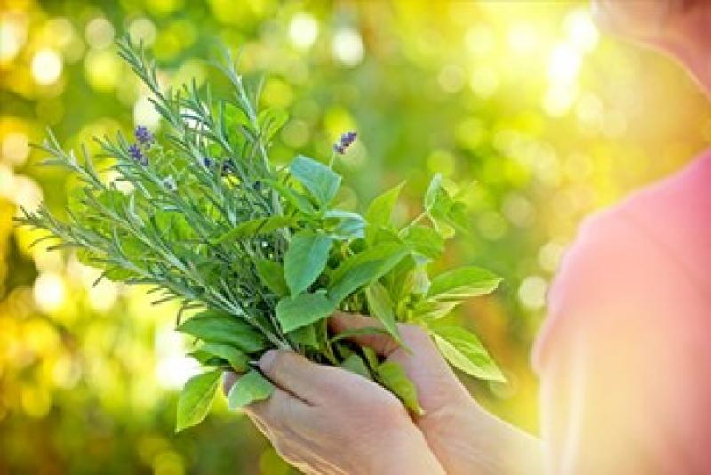6 أعشاب لها مفعول السحر على صحة المرأة