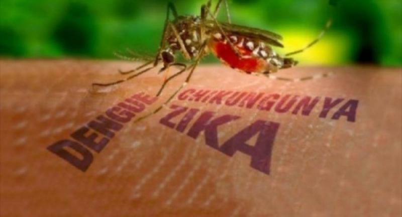 بالاسماء .. دول عربية معرضة لخطر فيروس زيكا