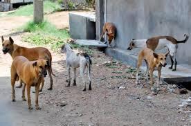 الأغوار الشمالية.. كلاب ضالة تهاجم أسرة بمنطقة وقاص