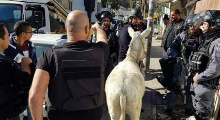 حتى الحمار لم يسلم من أذى العدو في القدس.. وهذا سبب توقيفه!