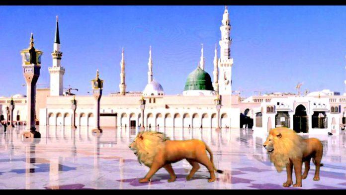 هل تعلم لماذا الأسود سوف تدخل المسجد النبوي في أخر الزمان ؟