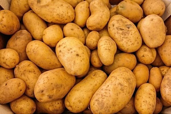 انخفاض اسعار البطاطا