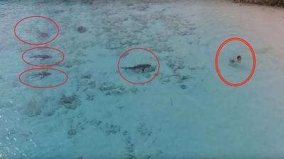 فيديو مرعب لطفل ينجو بإعجوبة من 4 أسماك قرش