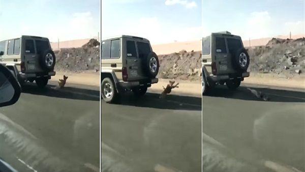 بالفيديو: شاهد سعودي يسحل كلباً بالشارع بسبب نباحه