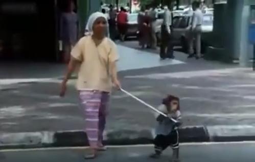 قرد يساعد امراة عمياء لتعبر الطريق - فيديو روعة