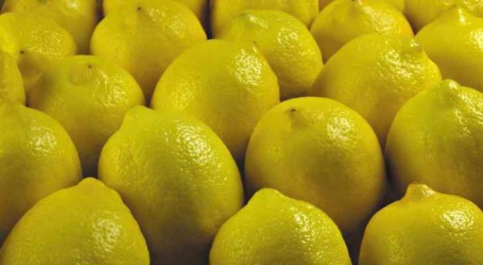 كيلو الليمون 80 قرش