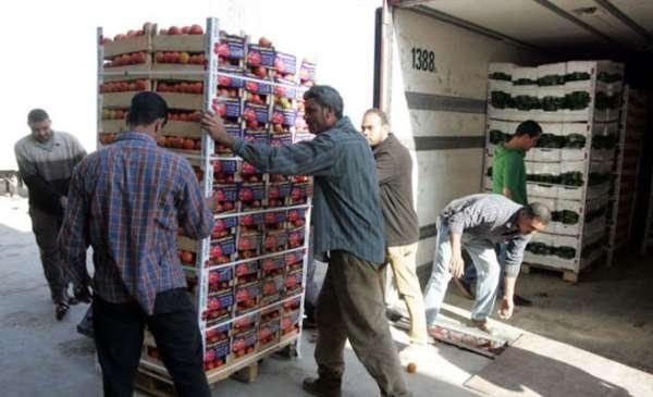 توقع انخفاض اسعار البندورة خلال ايام
