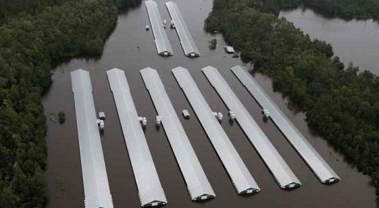 الإعصار فلورنس تسبب في غرق 1.7 مليون دجاجة