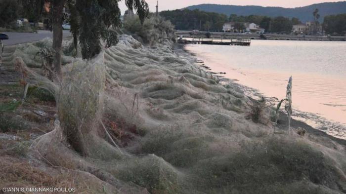 حفل تزاوج لعناكب يحول بحيرة يونانية لقبو مهجور