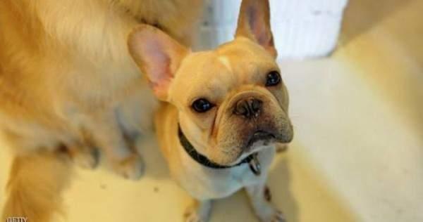 كلب شجاع ينقذ صاحبته من هجوم قاتل (فيديو)