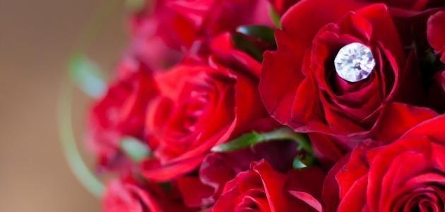 توقع استيراد الأردن 200 ألف زهرة حمراء لـ عيد الحب