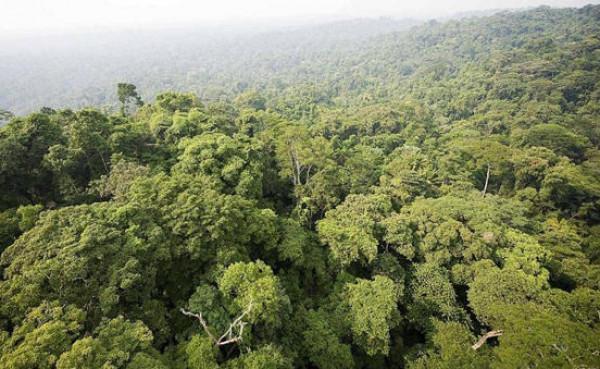 كارثة بيئية جديدة تنتظر العالم...اليكم النفاصيل!