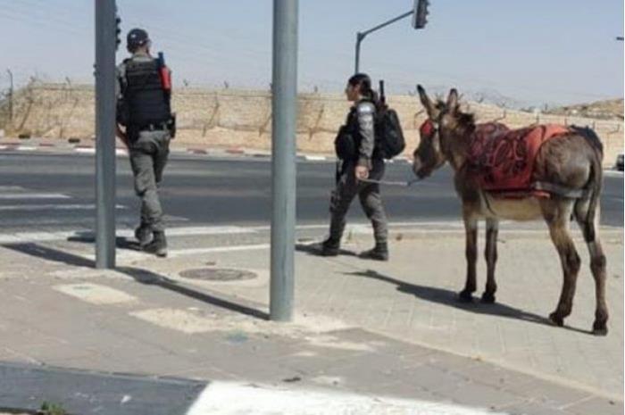 شرطة الاحتلال تصادر 'حمارا' في القدس