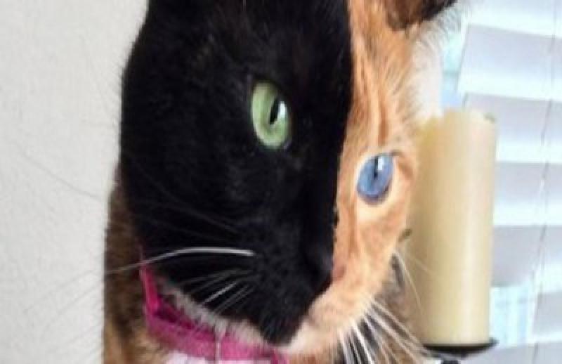 """قطة """"بوجهين"""" تحظى بنحو مليون متابع على """"فيسبوك"""