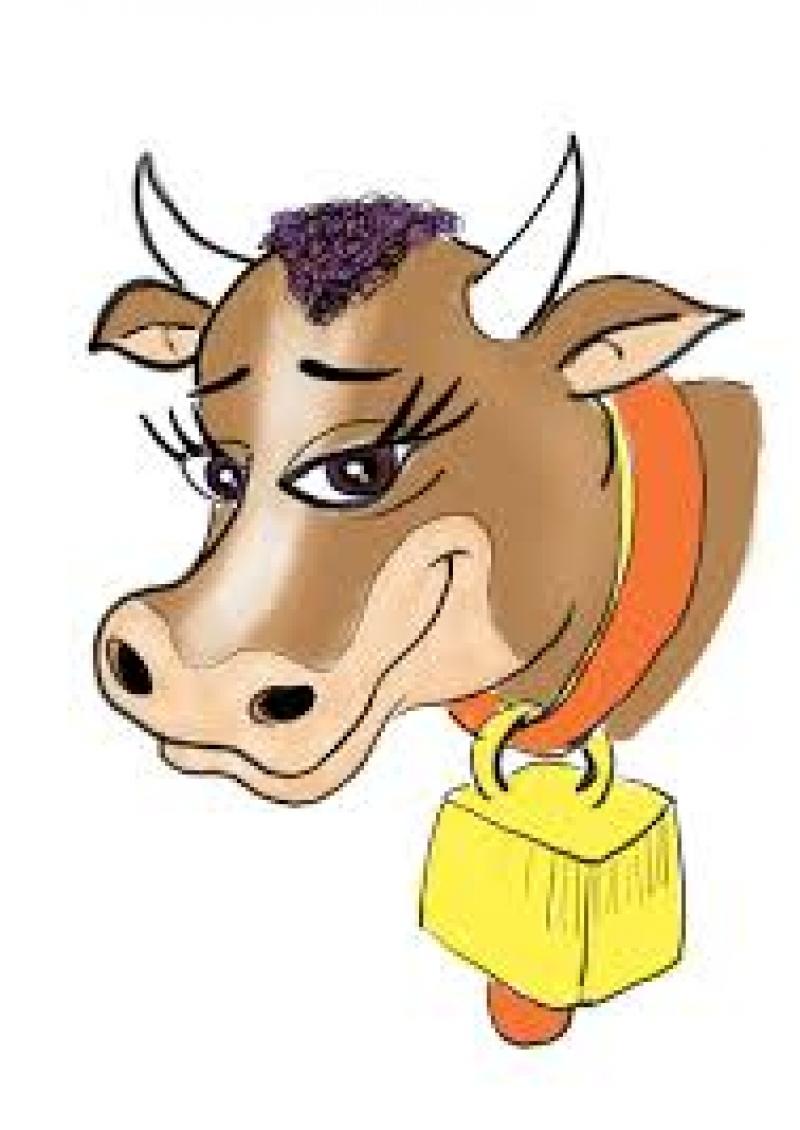 شحنة موبوءة من الأبقار الحية مصابة بمرض
