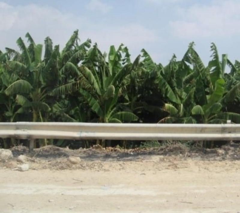 إخماد حريق مزرعة موز وأشجار حرجية وقصيب في محافظة البلقاء
