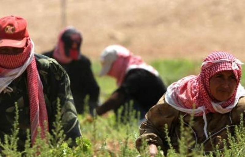 المعشر يدعو إلى إحلال العمالة الأردنية مكان الوافدة